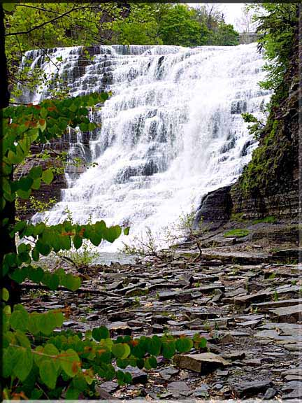 A budding Katsura tree is highlighted against a rush of waterfall at Ithaca Falls, Ithaca, NY.